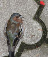Bird_sharpCrop